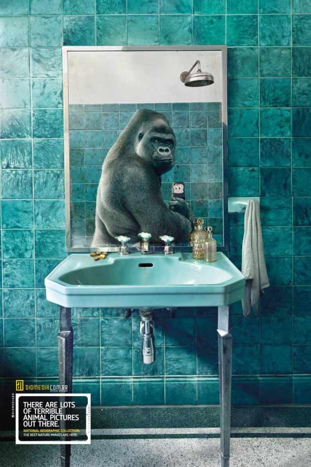 national-geographic-gorila
